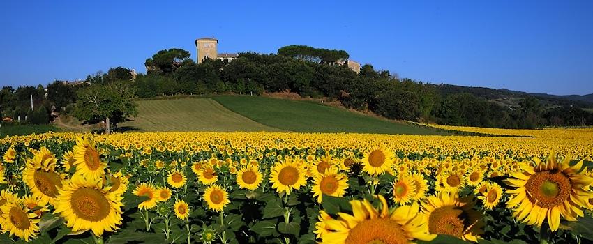 Burg Castiglione