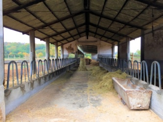 Bio-Freilandhaltung im Agriturismo Paganico