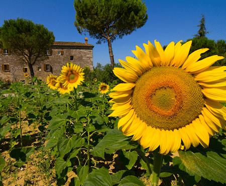 Bio-Bauernhof Asciano – Bio-Urlaub