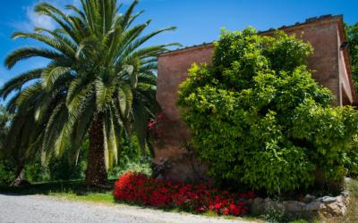 Agriturismo Crespina Außenansichten 05