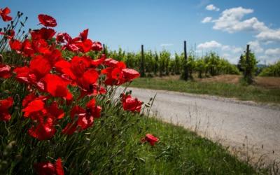 Agriturismo Crespina Außenansichten 11