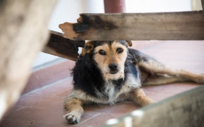 Agriturismo Crespina Hunde willkommen
