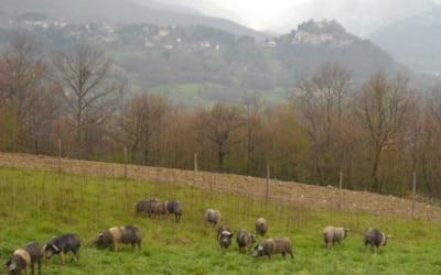 Bio Agriturismo Caprese 1 Panorama 05