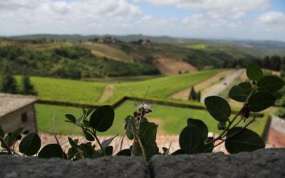 Burg Chianti 3 Außenansichten 06