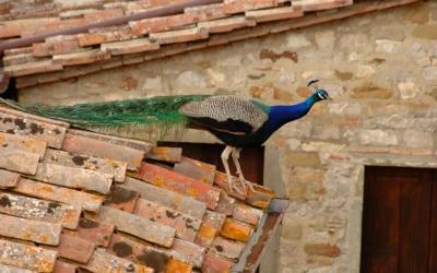 Burg Chianti 3 Außenansichten 24