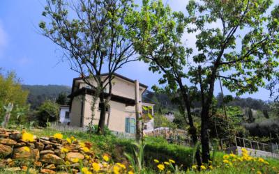 Ferienhaus Pietrasanta 1 Außenansichten 02