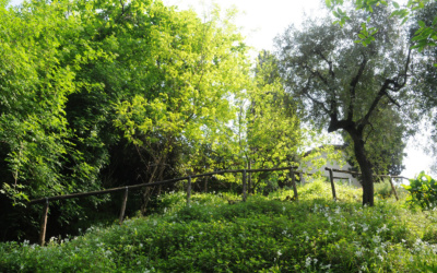 Ferienhaus Pietrasanta 1 Panorama 03