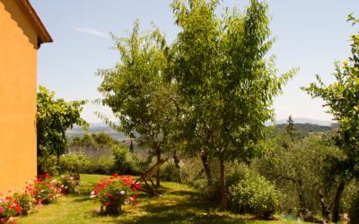 Ferienhaus Toskana 2 Garten 01