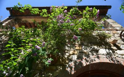 Ferienwohnungen Rosignano 1 (9)