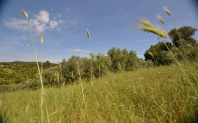 Ferienwohnungen Rosignano 1 Spielwiese (1)