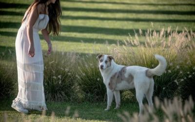 Landgut Terricciola Hunde willkommen (5)