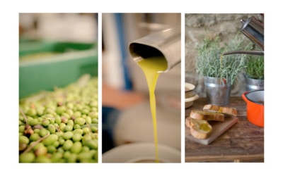 Landgut Terricciola Oliven Nudeln Schinken 1
