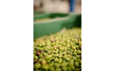 Landgut Terricciola Oliven Nudeln Schinken (3)