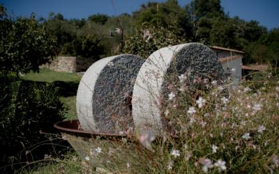 Landgut Terricciola Oliven Nudeln Schinken (4)