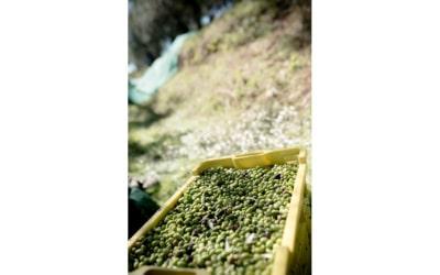 Landgut Terricciola Oliven Nudeln Schinken (5)