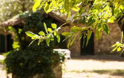 Landvilla Guardistallo Außenansichten 14