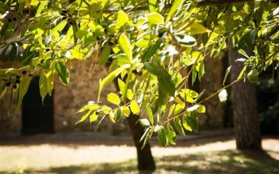 Landvilla Guardistallo Außenansichten 15