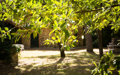 Landvilla Guardistallo Außenansichten 16
