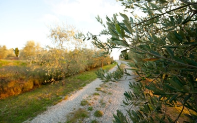 Landvilla Rapolano Terme 1 Zufahrt