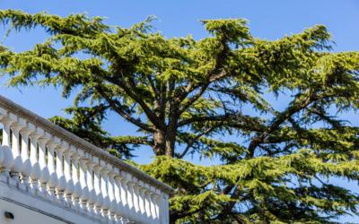 Villa Chianni 9 Impressionen 11