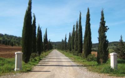 Villa Follonica Einfahrt 01
