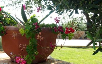 Villa Follonica Impressionen 15