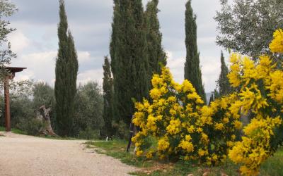Villa Follonica Impressionen 33