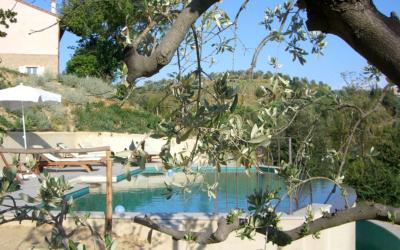 Villa Marti 3 Pool 02