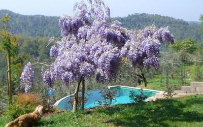 Villa Marti 3 Pool 06