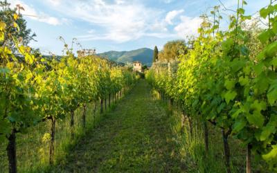 Villa Sesto Fiorentino (18)