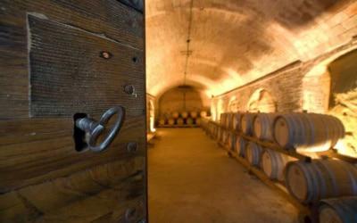 Weingut Terricciola 6 Impressionen 02