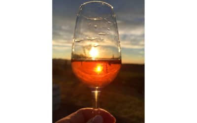 Weingut Terricciola 6 Impressionen 04