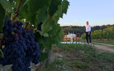 Weingut Terricciola 6 Impressionen 08
