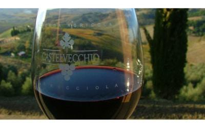 Weingut Terricciola 6 Impressionen 09