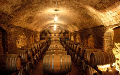 Weingut Terricciola 6 Impressionen 10