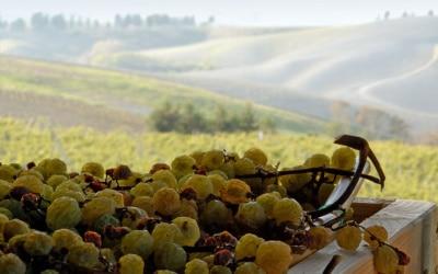 Weingut Terricciola 6 Panorama 08