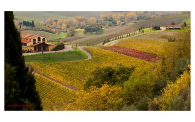 Weingut Terricciola 6 Panorama 09