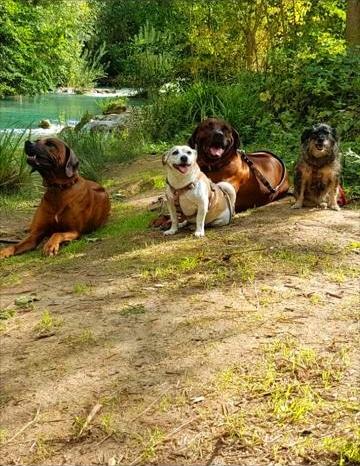 Hunde Weingut Terricciola 6