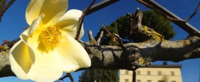 Frühlingserwachen in Italien