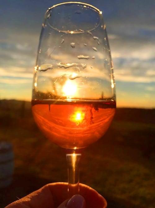 Weinprobe mit Kind und Kegel im Weingut Terricciola 6 – Weinstadt Terricciola