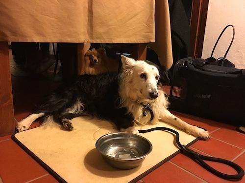 """""""Im Restaurant La Fornace sind unsere Hunde herzlich willkommen""""© J. Thumser & M. Wahlert"""