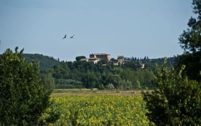 Burg Castiglione (11)