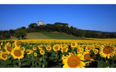 Burg Castiglione (6)