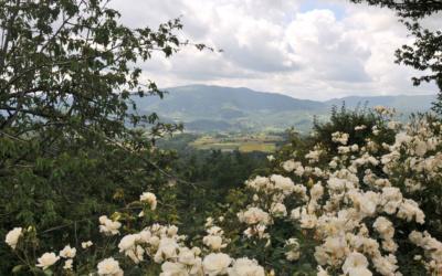 Landresidenz Mugello 2 (22)