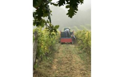 Weinlese in der Toskana (12)