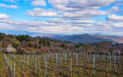 Weinlese in der Toskana (13)