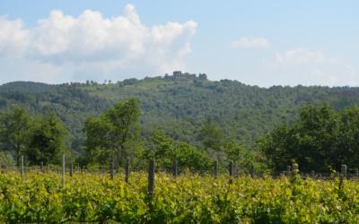Weinlese in der Toskana (15)