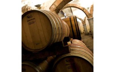 Weinlese in der Toskana (2)