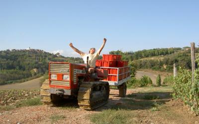 Weinlese in der Toskana (20)