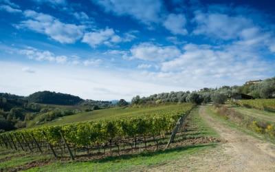 Weinlese in der Toskana (30)